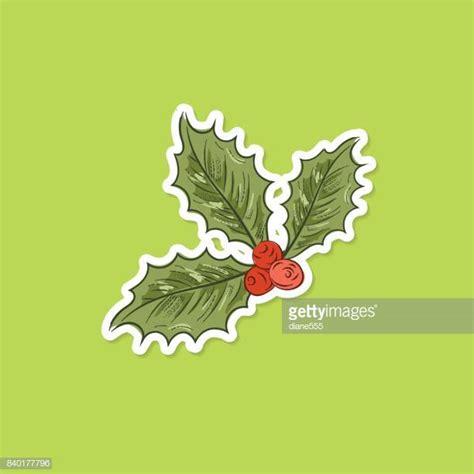 poinsettia leaves   premium high res pictures