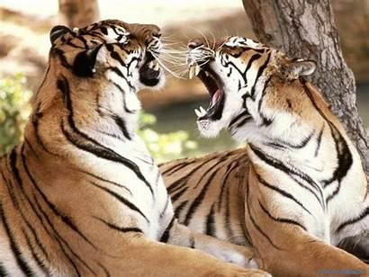 Wild Animals Animal Species Google