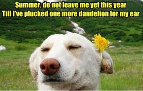 Summer Memes - 91 super summer memes