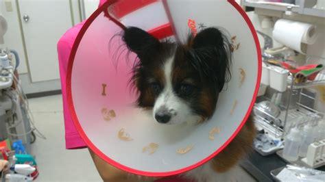 犬 去勢後 元気がない