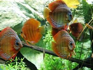 quel poisson pour un petit aquarium 28 images quel poisson choisir pour un petit aquarium