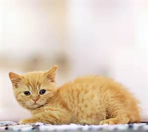cat images meow cats photo 10424888 fanpop