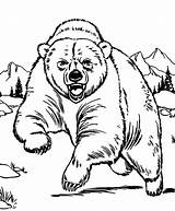 Bear Coloring Pages Grizzly Polar Outline Drawing Printable Bears Sleeping Animal Brown Templates Angry Line Zoo Hibernating Sheets Animals Sketch sketch template