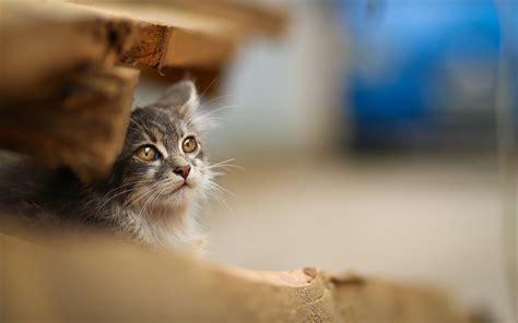 Cute Cats Download Hd Desktop Wallpapers 4k Hd