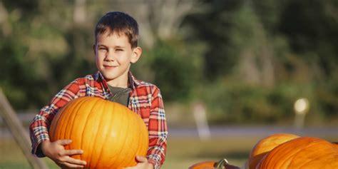 pumpkin patches  albuquerque nm