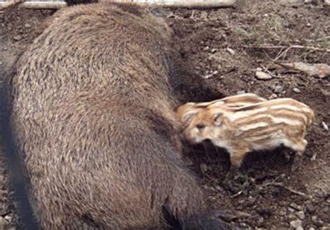 reproduction sexu 233 e chez les animaux site de 4eme