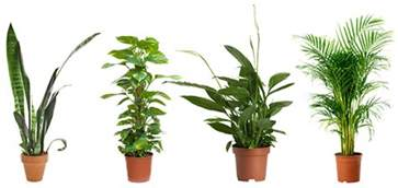 4 powerful air purifying plants to clean the air in your home
