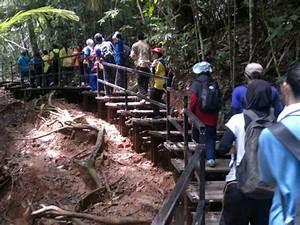 Top Activities in Taman Negara - Backpackersshop
