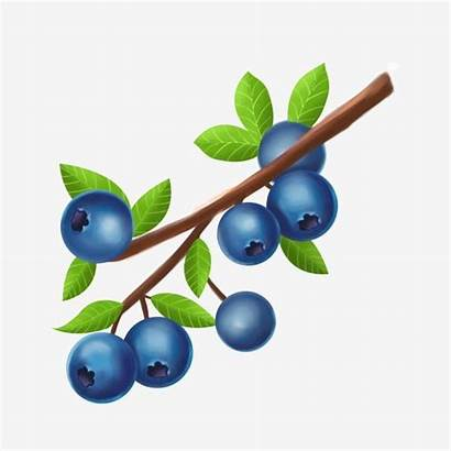 Blueberry Blueberries Psd Fruits Pngtree Upgrade Authorization