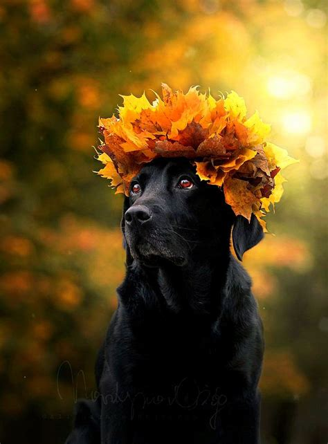 dogs   love autumn life  dogs