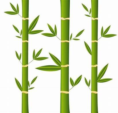 Bamboo Sticks Bambu Cartoon Bamboestokken Premium Freepik