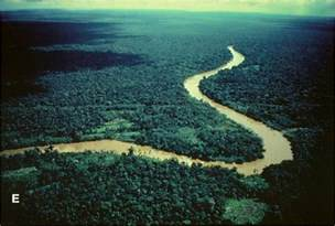Subterranean Amazon river 'is not a river' - Computer Tricks SEO ...