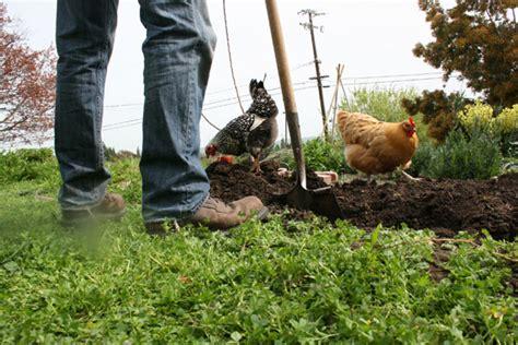 Backyard Chicken Farm Coops Supplies Itty Bitty Impact