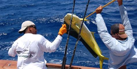 miami fishing charters boats cities