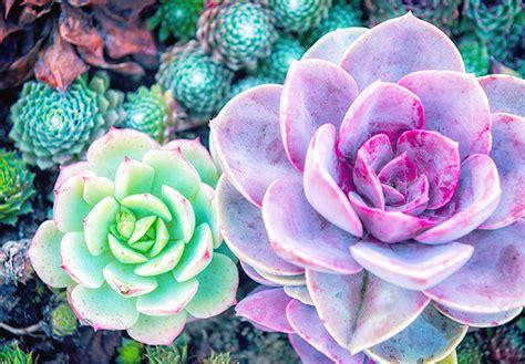 stunning desert plants ftdcom