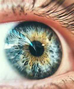 Macro Eye Related Keywords