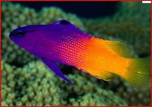 small neon saltwater fish