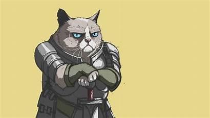 Cat Grumpy Knight Meme Wallpapers Memes Halloween