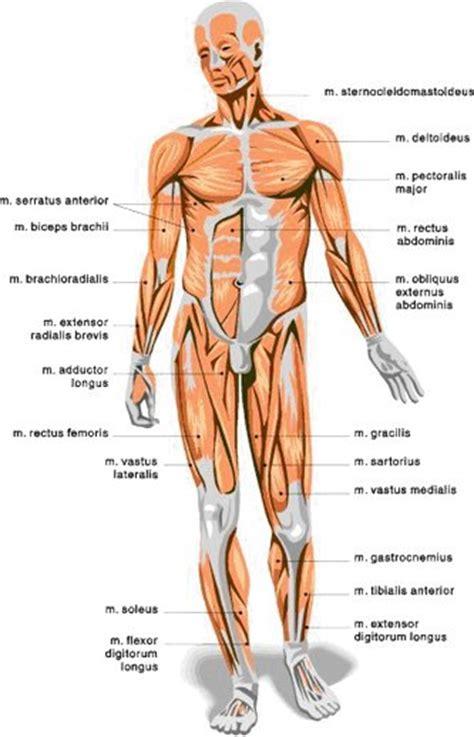 Trainingsschema fitness spiermassa
