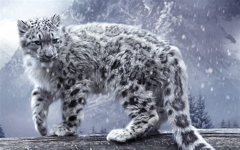 Snow Animal Wallpaper - leopard snow leopards animals nature snow winter