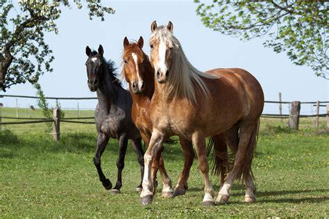 horse horses running herd buying pet insurance pasture equino equine petplan squad shutterstock