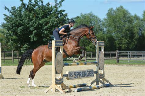 jumping horse horses exercises exercise ready showjumping those