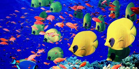 incredibly colorful freshwater aquarium fishes