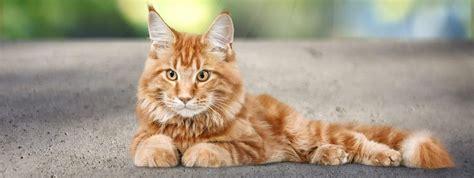 katzenkrankenversicherung das  fuer katzenhalter