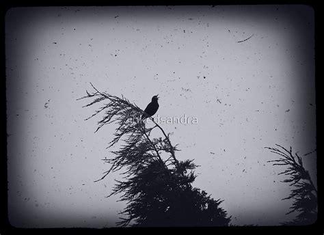 blackbird singing   dead  night  inkedsandra