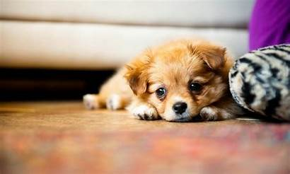 Puppy 1080p Wallpapers Dogs Dog Puppies Background