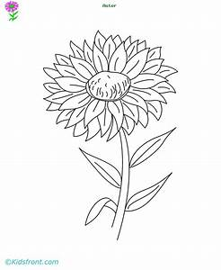 Aster Flower Coloring Pages and Printable