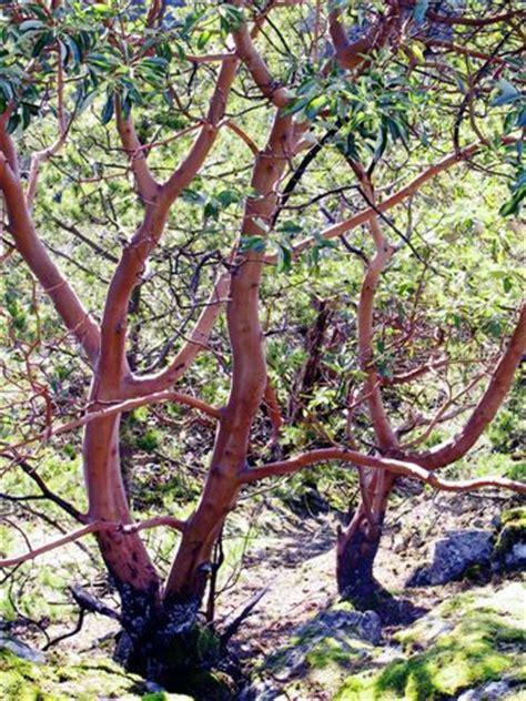 arbutus tree special sewells marina