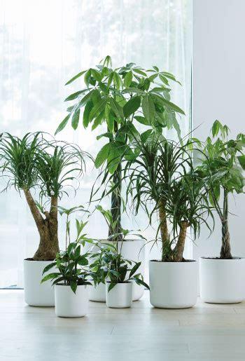 Große Zimmerpflanzen Günstig by Gartencenter M 252 Hlenweg Ihr Gartencenter In Owl