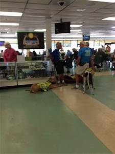 naples fort myers greyhound track bonita springs all With naples dog track