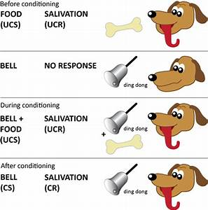 dog pavlov classical conditioning week 2 development of ...