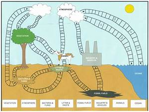 The 25+ best ideas about Carbon Cycle on Pinterest | 5th ...