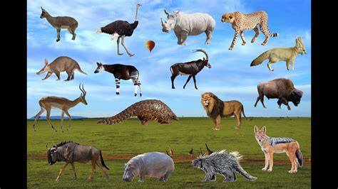 African Animals Names And sounds (All Animals) Learn