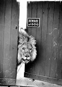 Leo The Lion Qu... Lion Sign Quotes