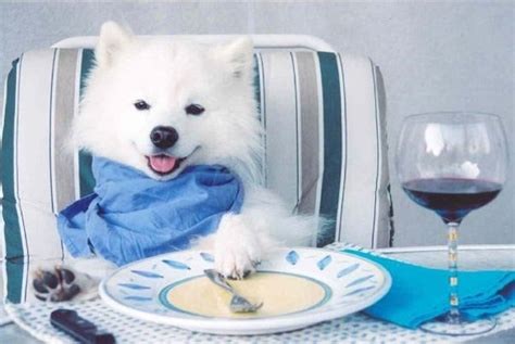 dog eating at table i 39 d like the filet mignon please