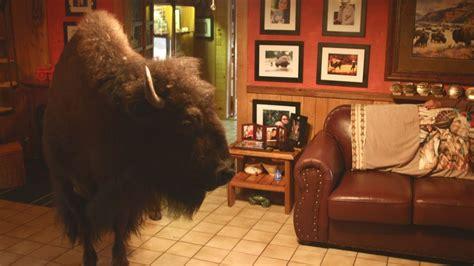 buffalo   house animal odd couples episode