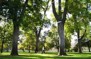 fall is time to take stock of protect your denver ash trees