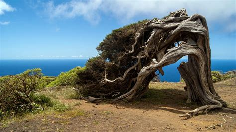 Hiking in El Hierro, Canary Islands | One Two Trek