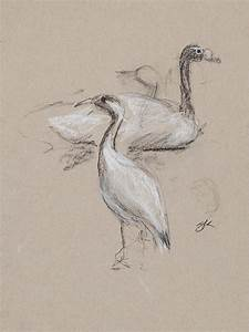 Birds Charcoal Study Drawing by Greg Kopriva