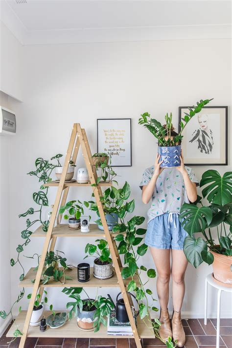 trees you can plant to house indoor plant guide 5 beginner plants you can t kill k is for kani