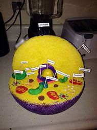Pictures of a 3d plant cell mydrlynx 3d plant cell model publicscrutiny Image collections