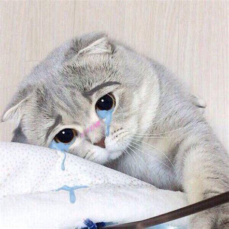 can cats cry 7 best images about cute cats on pinterest cat crying cats and nice