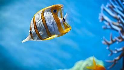 Fish Sea Animals Coral Wildlife Wallpapers Desktop