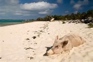 Pig Island Exuma Bahamas Beach