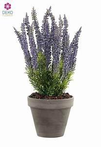 Lavendel Pflanzen Im Topf : k nstliche erika pflanze lavendel 34cm im tontopf ~ Frokenaadalensverden.com Haus und Dekorationen