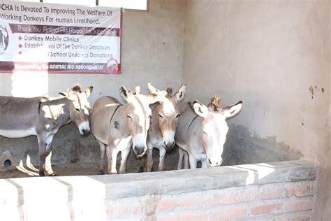 helping   donkey abuse  tanzania